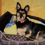 pokoje dla psów (2)